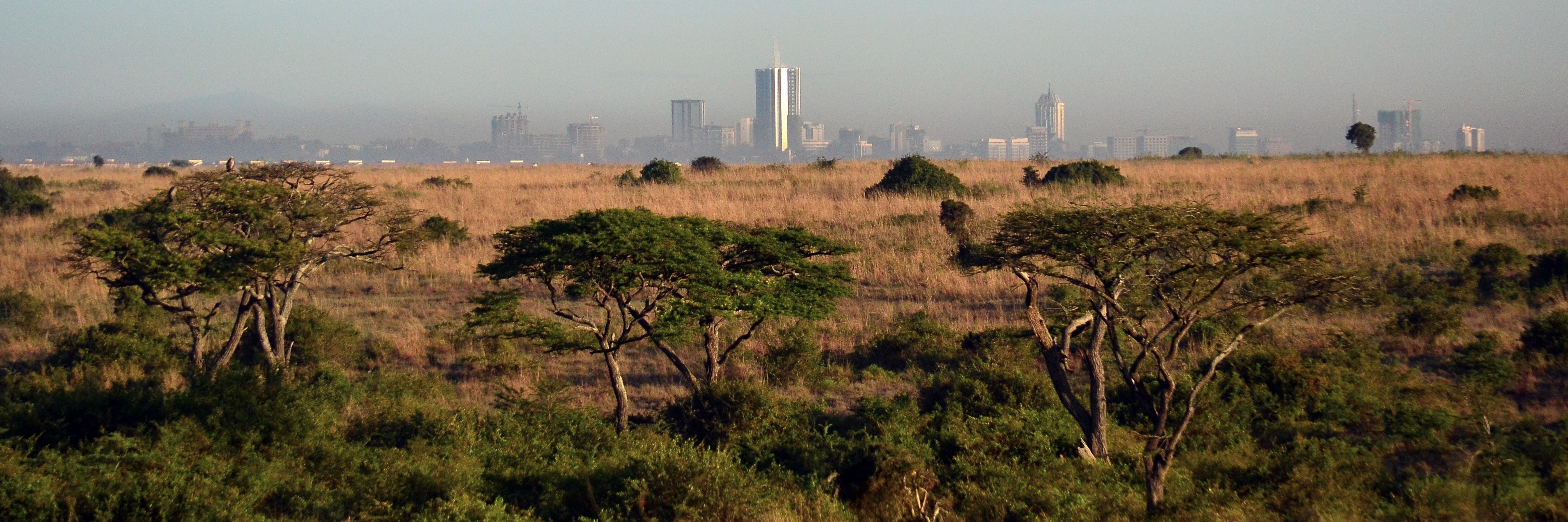 Africa, trees and cityscape